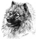 Keeshond Personalised Greetings Card